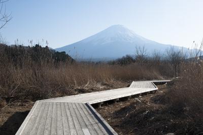 河口湖林間学園裏手より望む富士山