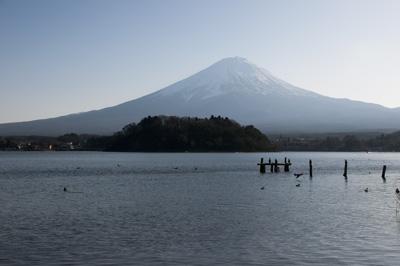 富士山と鳥のサンクチュアリ