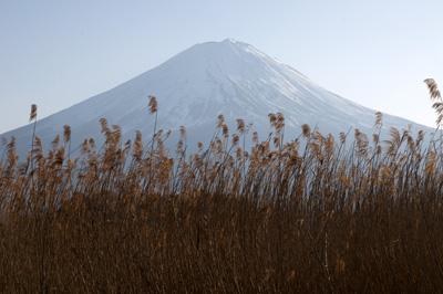 葦原の向こうに見える富士山