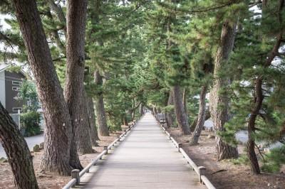 「神の道」と呼ばれる松並木道