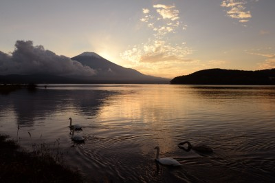 夕刻の富士山と山中湖と白鳥